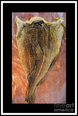 Griffin Mixed Media - Dried Salted Codfish Back by Barbara Griffin