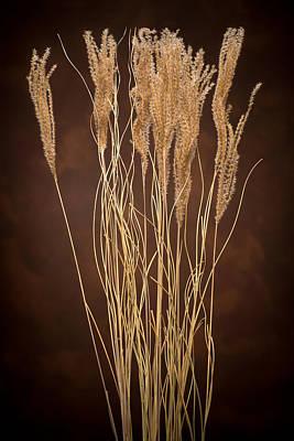 Dried Winter Grasses Original by Steve Gadomski