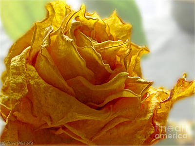 Photograph - Dried Yellow Rose by Debbie Portwood