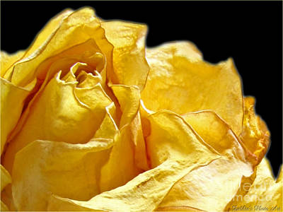 Photograph - Dried Yellow Rose II by Debbie Portwood