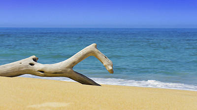 Driftwood Photograph - Driftwood by Aged Pixel