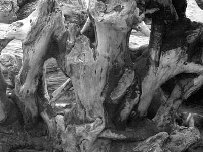 Photograph - Drift Wood Cove by Tarey Potter