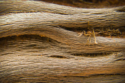 Wood Grain Photograph - Driftwood 1 by Adam Romanowicz