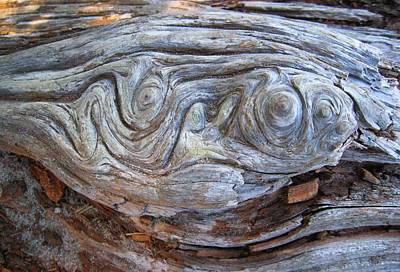 Photograph - Driftwood 1 by Sharon Jones