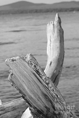 Photograph - Driftwood 2 by Barbara Bardzik