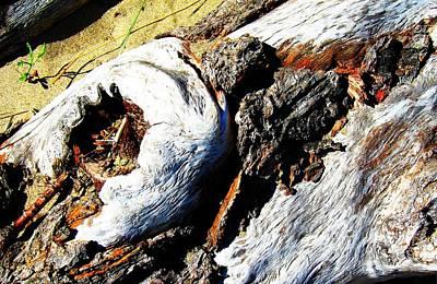 Photograph - Driftwood 20 by Sharon Jones