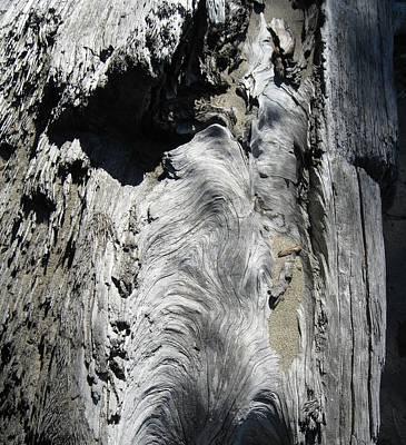 Photograph - Driftwood 4 by  Sharon Jones