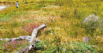 Digital Art - Driftwood And Wildflowers II by Jim Pavelle