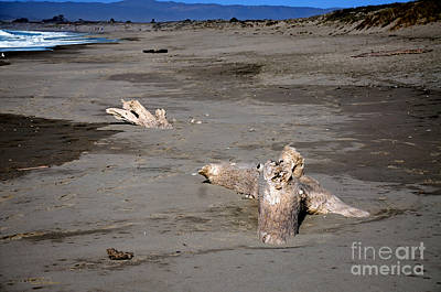 Photograph - Driftwood Posing On A Monterey Bay Beach by Susan Wiedmann