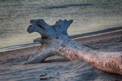 Photograph - Driftwood At Dawn 1 by Leah Palmer