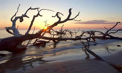 Driftwood Photograph - Driftwood At Dawn by Cathy Laurenzi