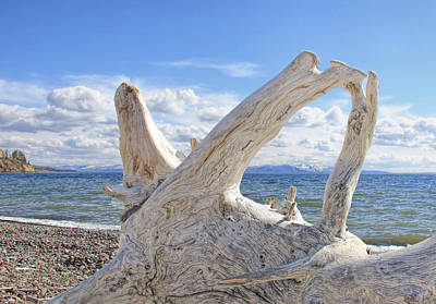 Photograph - Driftwood At Yellowstone Lake  by Jennie Marie Schell