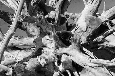 Photograph - Driftwood by Barbara Bardzik