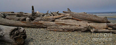 Photograph - Driftwood Beach by Ansel Price