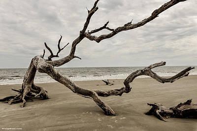 Photograph - Driftwood Beach by Craig Gum