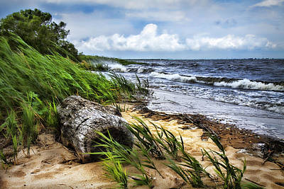 Photograph - Driftwood By The Sea by Trudy Wilkerson