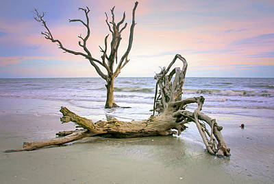 Edisto Island Photograph - Driftwood by Daniela Duncan