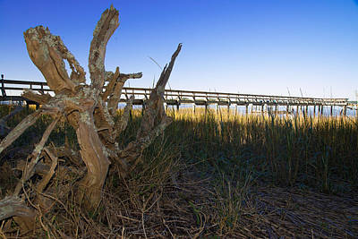 Photograph - Driftwood Dataw by Bonnie Leigh Delar