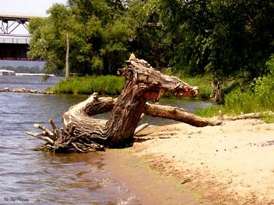 Photograph - Driftwood Dragon by Wild Thing