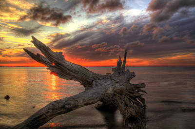 Jekyll Island Photograph - Driftwood Eye Of Fire by Greg and Chrystal Mimbs