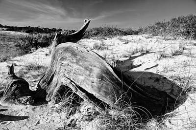 Photograph - Driftwood by George Taylor