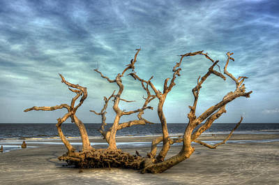 Photograph - Driftwood Grove by Greg and Chrystal Mimbs