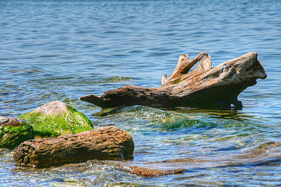 Cottage Photograph - Driftwood by Heather Allen