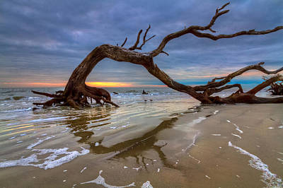 Driftwood Beach Fog Wall Art - Photograph - Driftwood II by Debra and Dave Vanderlaan