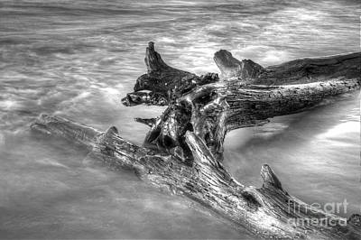 Lake Superior Wall Art - Photograph - Driftwood In Lake Superior by Twenty Two North Photography