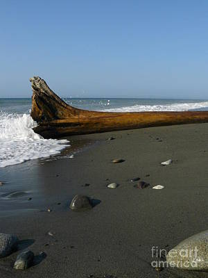 Photograph - Driftwood by Jane Ford