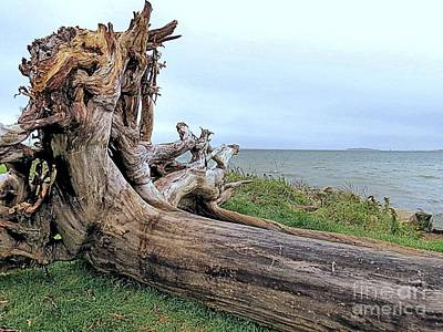Photograph - Driftwood by Janice Drew