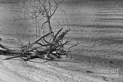 Photograph - Driftwood by Olga Hamilton