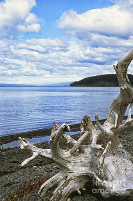 Driftwood On Beach Art Print by Thomas R Fletcher