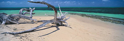 Driftwood On The Beach, Green Island Art Print by Panoramic Images