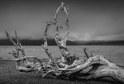 Driftwood Beach Fog Wall Art - Photograph - Driftwood On The Beach In The Bay At Port Renfew by Randall Nyhof