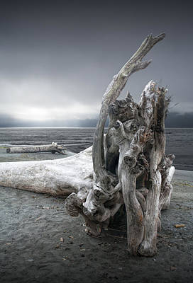 Through The Viewfinder - Driftwood on the Beach by Randall Nyhof