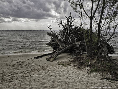 South Hutchinson Island Photograph - Driftwood On The Shore by Fran Gallogly
