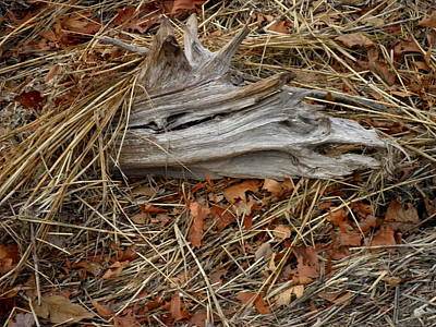 Photograph - Driftwood On The Shore by Kate Gallagher