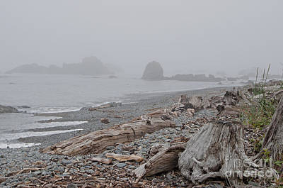 Photograph - Driftwood On The Shore by Lula Adams
