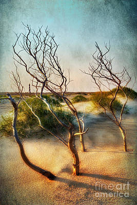Driftwood Sand Dunes And Lighthouses II Art Print
