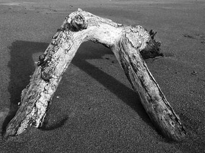 Photograph - Driftwood by Sandra Selle Rodriguez