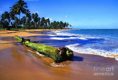 Driftwood Sea Palms Art Print by Thomas R Fletcher