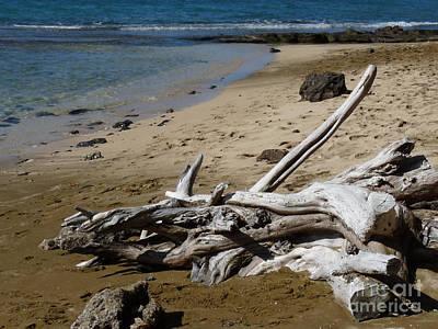 Marsh Photograph - Driftwood Shoreline by Deborah Smolinske