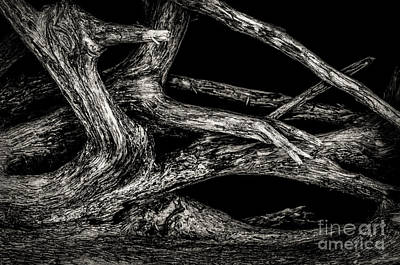 Photograph - Driftwood Study 2 by Michael Arend