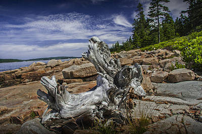 Driftwood Stump On The Shoreline In Acadia National Park Art Print by Randall Nyhof