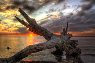 Photograph - Driftwood Sunset by Greg and Chrystal Mimbs