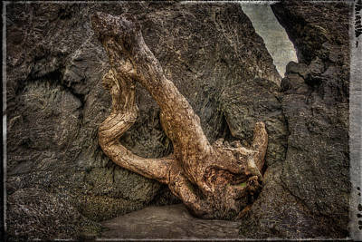 Photograph - Driftwood by Thom Zehrfeld