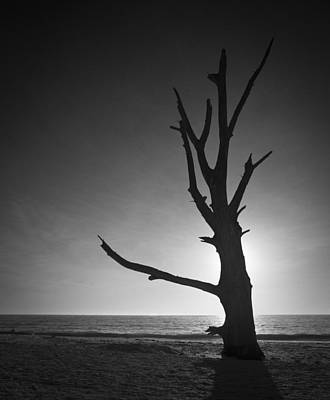 Photograph - Driftwood Tree On Lovers Key by Bradley R Youngberg