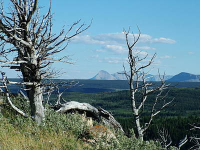 Photograph - Gnarled Trees And Divide Mountain by Tracey Vivar