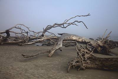 Photograph - Driftwood Trees On Jekyll Island by Gordon Elwell